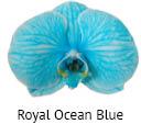 Orchideeen soorten64