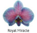 Orchideeen soorten65
