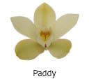 Orchideeen soorten10