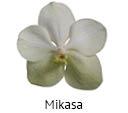 Orchideeen soorten101