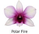 Orchideeen soorten24