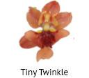 Orchideeen soorten42
