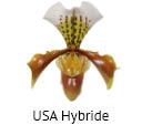Orchideeen soorten46