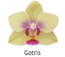 Orchideeen soorten49