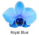 Orchideeen soorten63