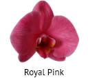 Orchideeen soorten66