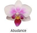Orchideeen soorten70