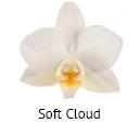 Orchideeen soorten73