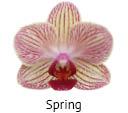 Orchideeen soorten74