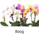 Orchideeen soorten79