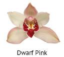 Orchideeen soorten9
